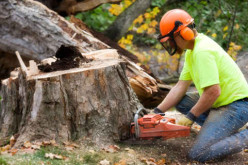 The Fundamentals Of A Competent Tree Service In Las Vegas