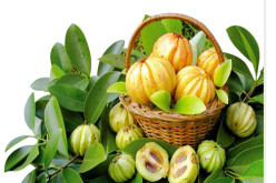 Be Slim with Garcinia Cambogia
