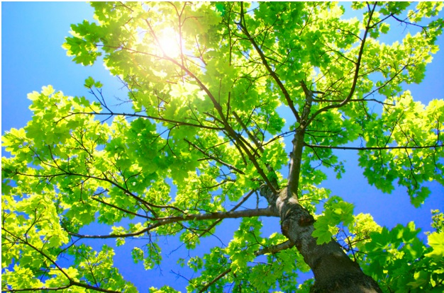 A Trained Arborist Will Take Care Of All Your Tree Pruning And Removal Needs