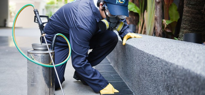 Trust An Accredited Pest Control Company For Your Extermination Needs