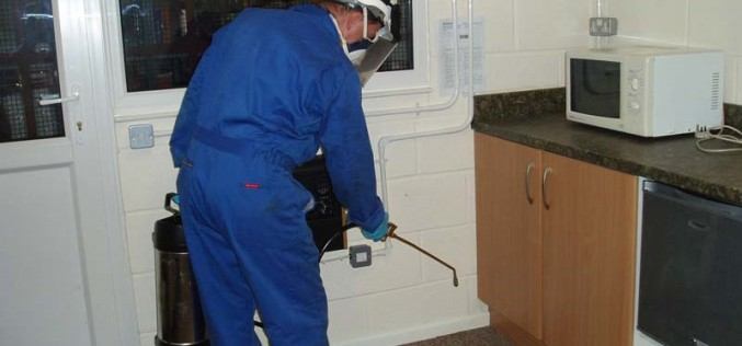 Splendid Pest Controllers In Essex: Amazing Results With Budget Friendly Price