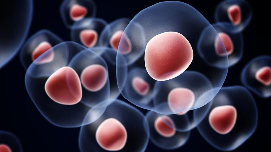 Know Everything About Stem Cells