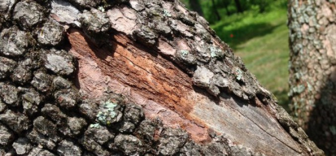 Spotting The Signs Of A Diseased Tree