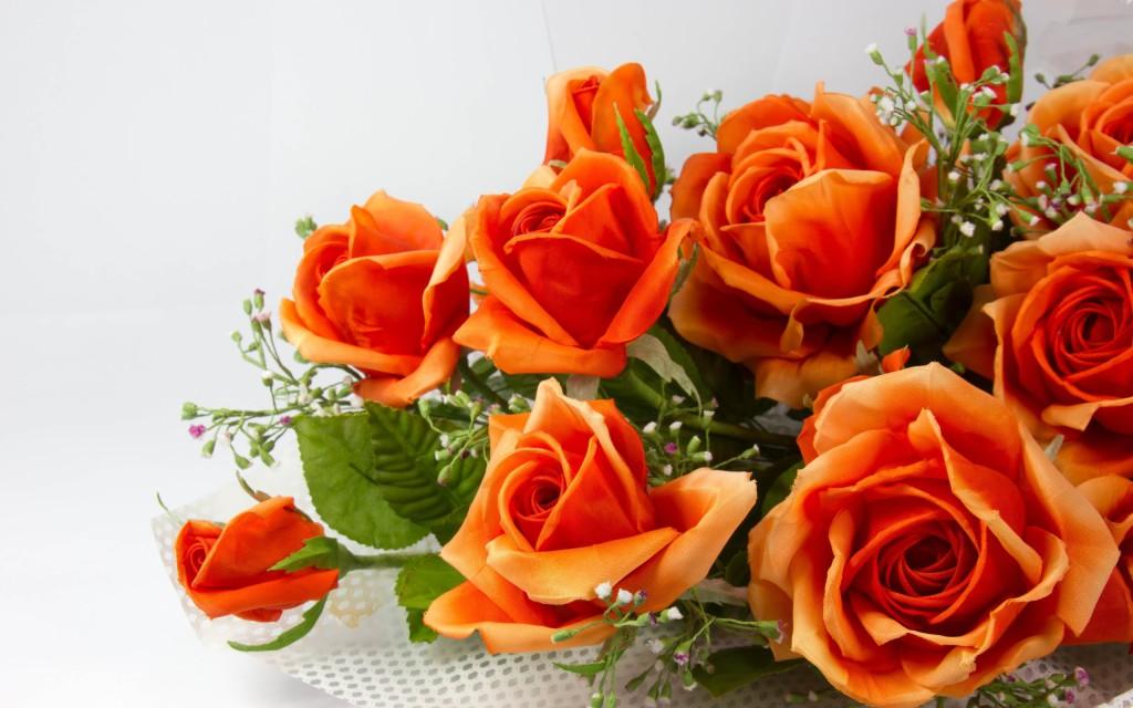 orange-roses