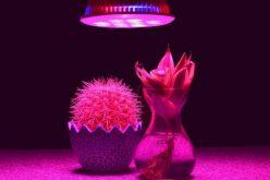 How to Build a Four Light Grow