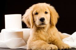 Puppy Potty Training – All You Have To Know