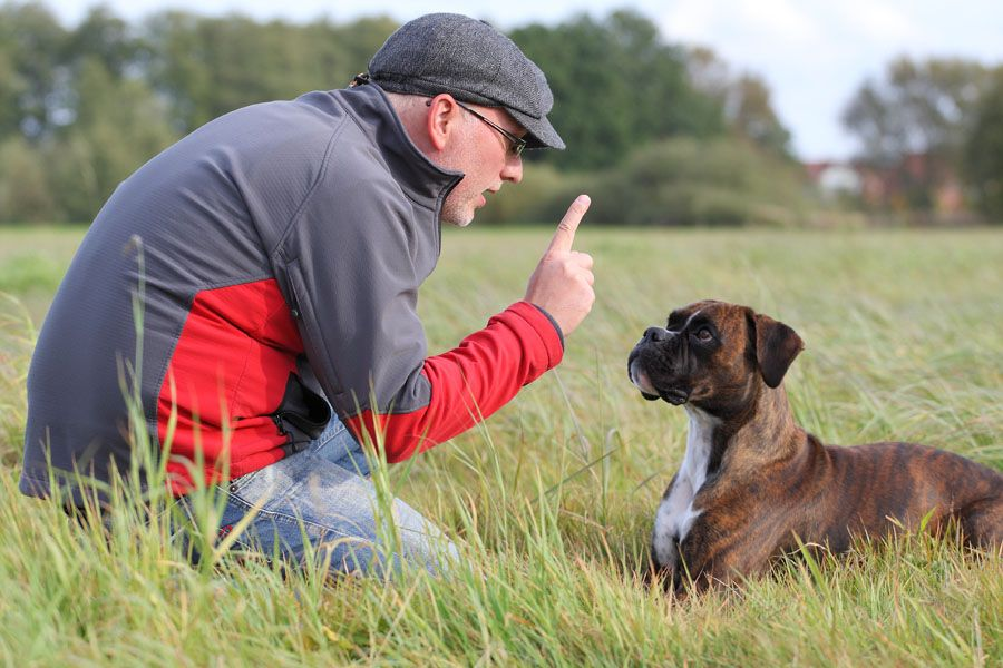 6 Reasons To Enroll Your Dog In A Dog School