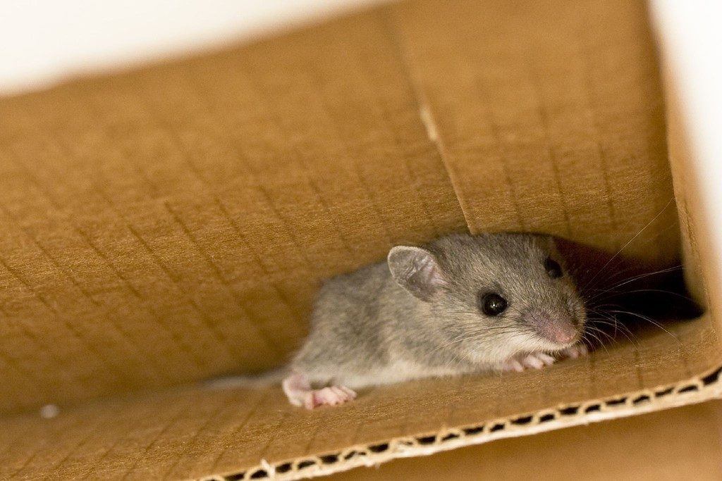How To Keep Mice Out Of Your House