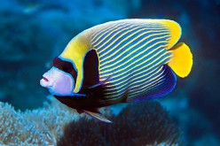 Pets: Marine Aquarium Fishes