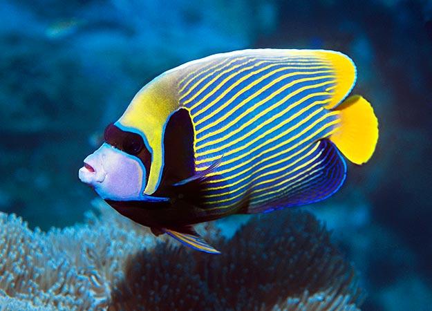 Pets: Marine Aquarium Fishes