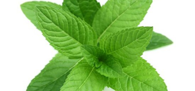 5 Plants For Indigestion Problem