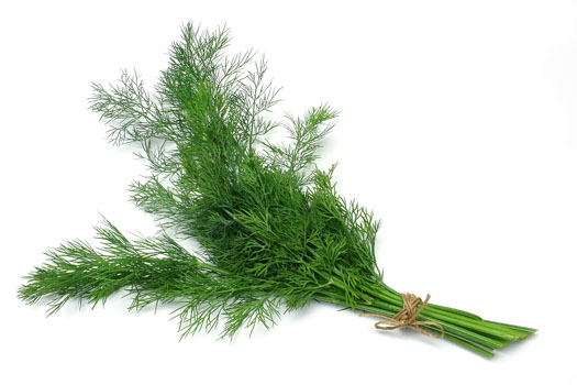 5 Plants For Indigestion Problem4