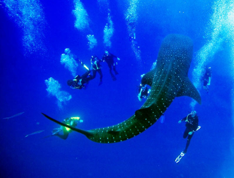Experiencing First Scuba Dive Of Life? Read How To Prepare Yourself?