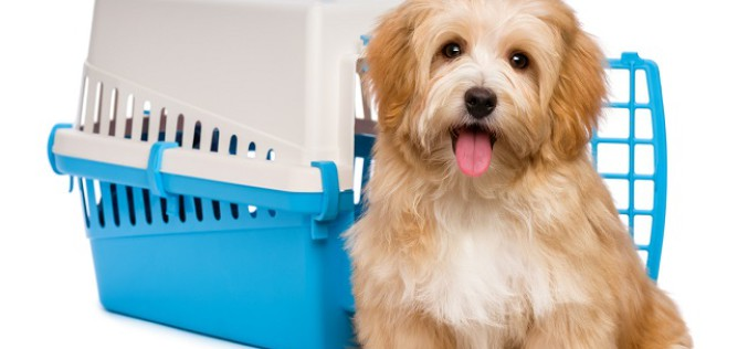 Pet Transport – Know All Services For Your Adorable Pets