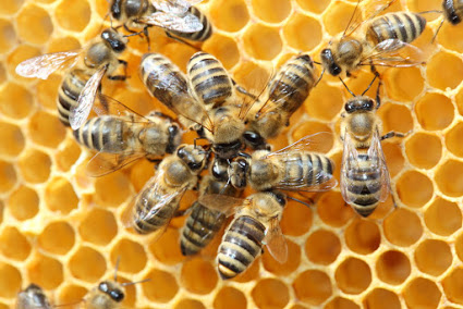 Easy Ways To Get Rid Of Beehives