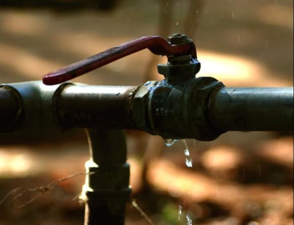 Plumbing Leaks Attract Household Pests