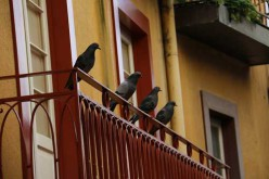 Bird Proofing – The Right Solution To Save You from The Menace Of Birds