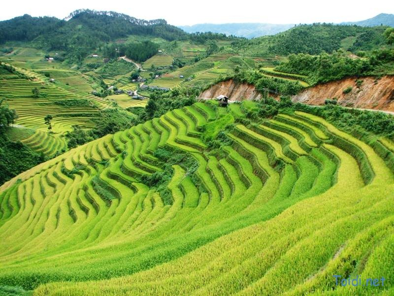 Experience The Best Of Vietnam With Viet Bamboo Travel's - Vietnam Travel Packages Like No Other