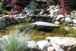 The Beauty And Benefits Of Backyard Water Features